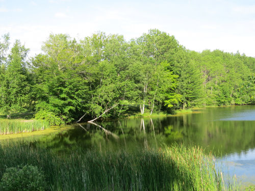 green foliage around a pond