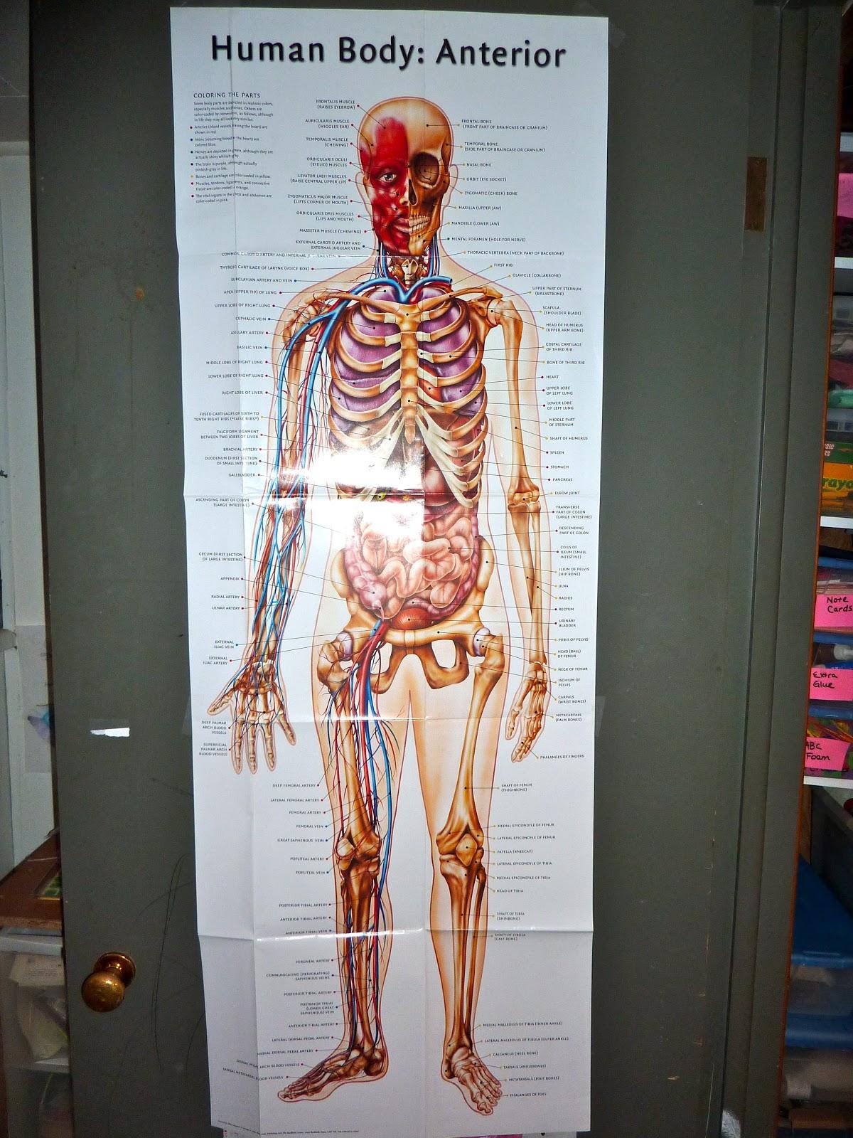 Our Human Body Montessori Activities