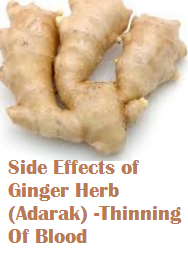 Side Effects of Ginger Herb (Adarak) -Thinning Of Blood