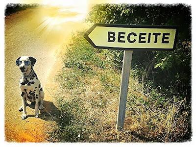 No te comas un Donete en Beceite, perro, Nuria Marti Sans