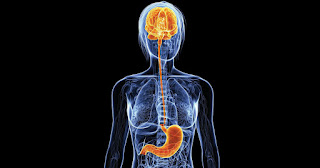 اسرع طريقة للتخلص من الكرش و الأرداف : الصلة بين المخ والأمعاء