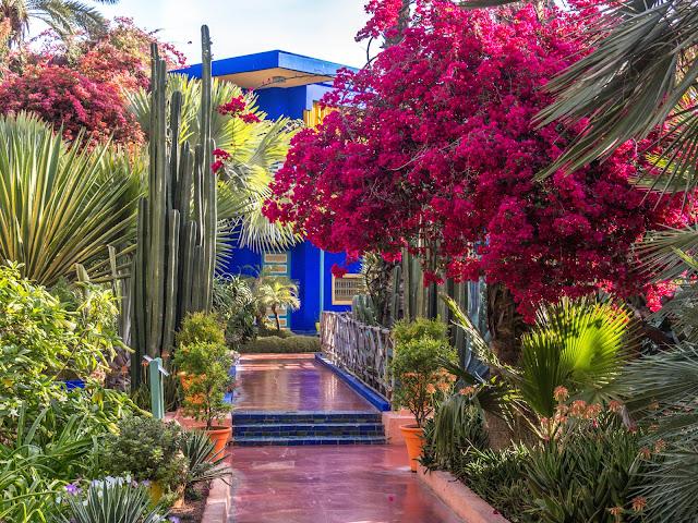 Majorelle gradina de cactusi Maroc peisagistica exotica