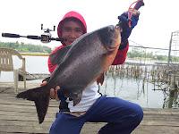 Resep Umpan Ikan Bawal Ampuh Dan Jitu