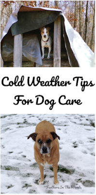 Winter | dog care