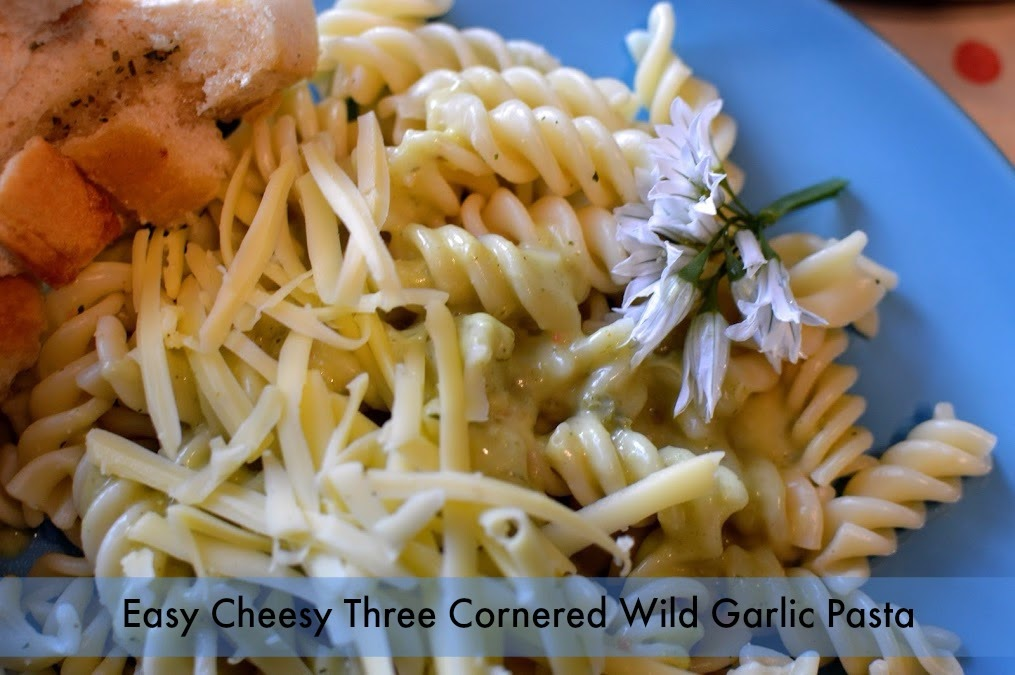 , Quick and Easy Cheesy Three Cornered Wild Garlic Pasta