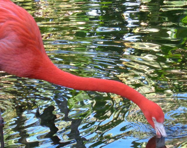 Flamingo at Flamingo Gardens in Davie, FL