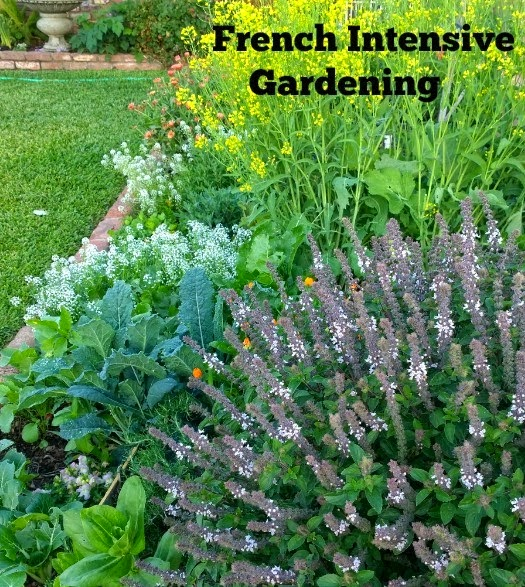 French intensive gardening, Growing An Urban Vegetable Garden - Tips And Information For Year Round Gardening In Southern California
