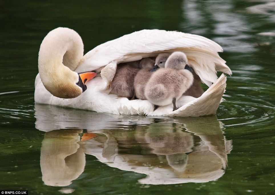 Photography Moments: Animal - Mother and Baby 1