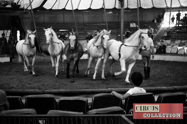 Répétition de dressage des chevaux de Fredy Knie junior  sous le chapiteau du Cirque National Suisse Knie  1970