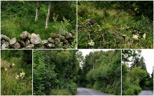 collage of summer green images from Connemara Ireland