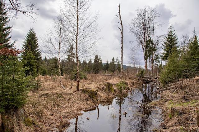 Rundtour durchs Hochmoor im Nationalpark Bayerischer Wald