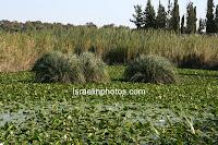 ישראל בתמונות: גן לאומי מקורות הירקון ותל אפק - אנטיפטריס