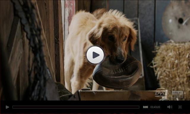 A Dog S Purpose Free Movie Streaming