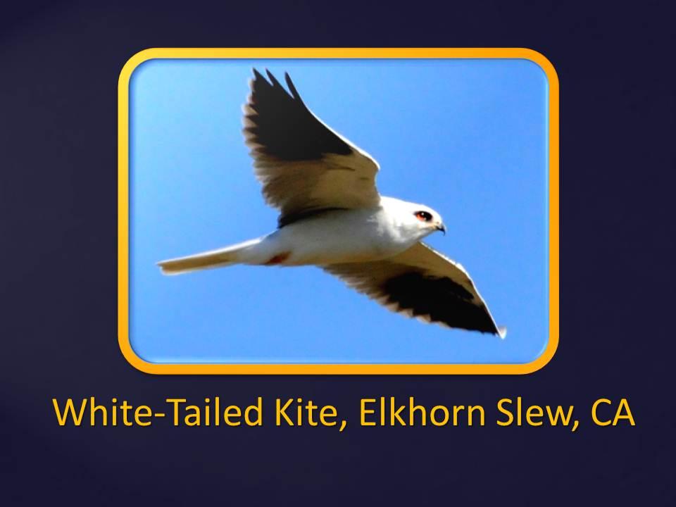 Slide Show Of Some Of My Bird Photos >> The Nature Of Framingham More Fantastic Birds West Coast