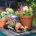 Como conservar seu novo jardim de flores vivo