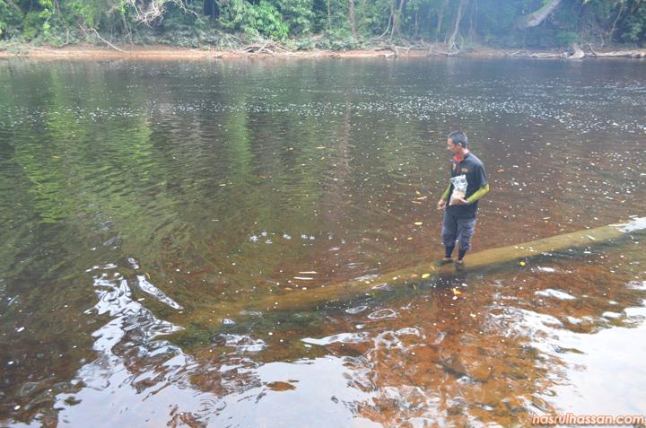 Lubuk Ikan Kelah, Santuari Ikan Kelah Lubuk Tenor Taman Negara
