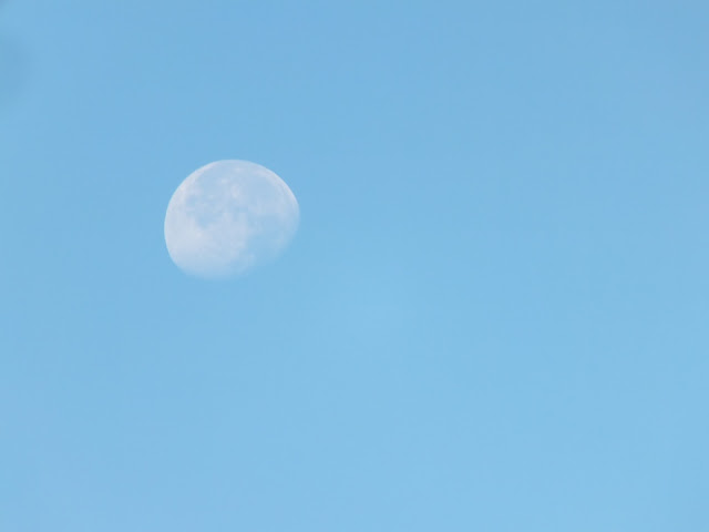 Morning Moon - Still appear in 8 a.m