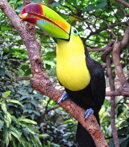 Carol's Corner: Poem #24- Amazon Rainforest