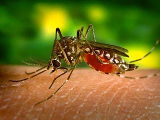 Epidemias e pestes
