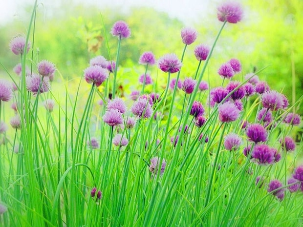 Fond ecran printemps fleurs fonds d 39 cran hd for Fond ecran animaux hd