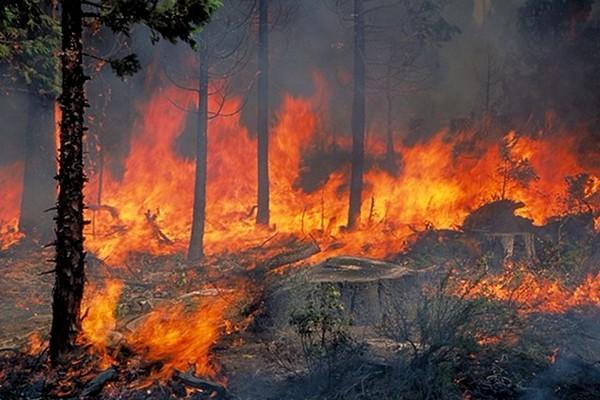 Σοκάρουν τα στοιχεία για τις δασικές πυρκαγιές στην Ελλάδα: Έχουν καεί 86.000 στρέμματα μέχρι στιγμής φέτος - Στη λίστα Λάρισα και Μαγνησία
