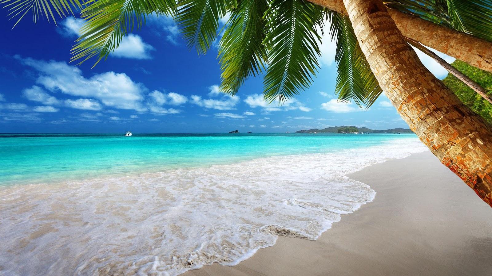 40 Hình ảnh đẹp về bãi biển đại dương xanh ngát mê hồn