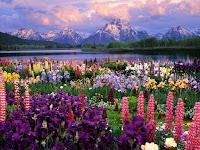 Rainbow Garden, Taman Pelangi yang Penuh Aneka Warna Bunga