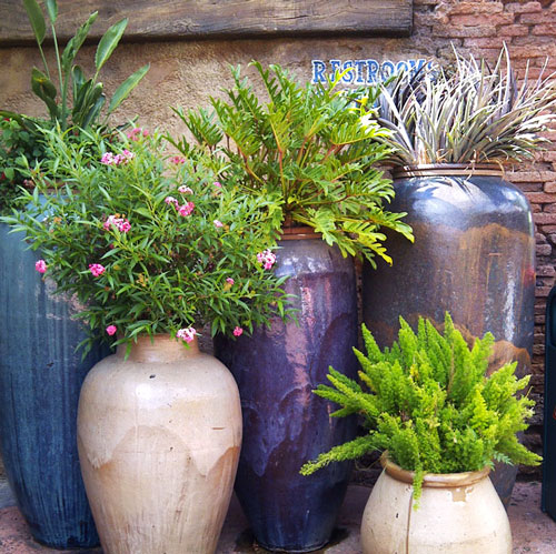 Container Garden Ideas: The Rainforest Garden: 10 Container Gardening Ideas