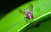 Πώς να κρατήσετε τις μύγες μακριά από το σπίτι σας!