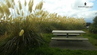 Taranaki isite centre bench beautiful