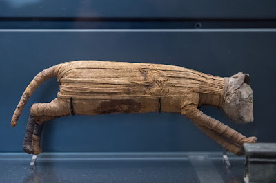 Cat mummy from Egypt