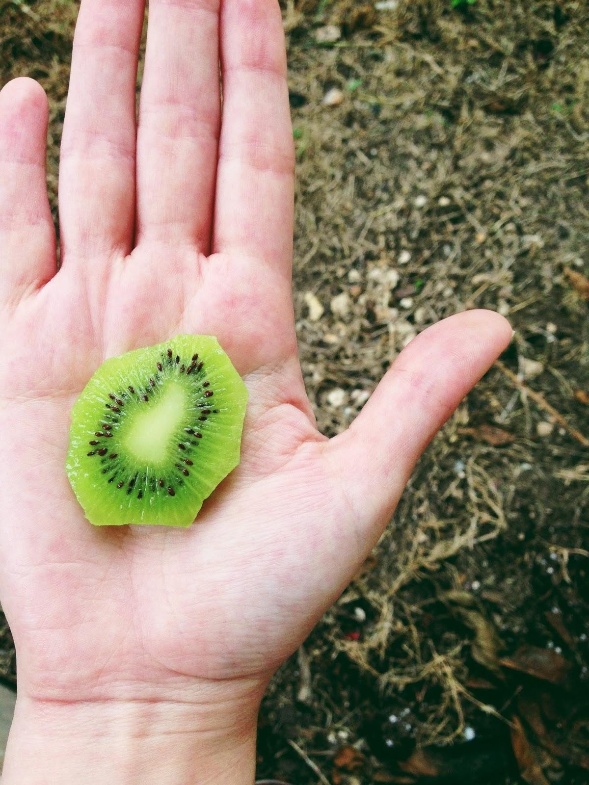 kiwi photography