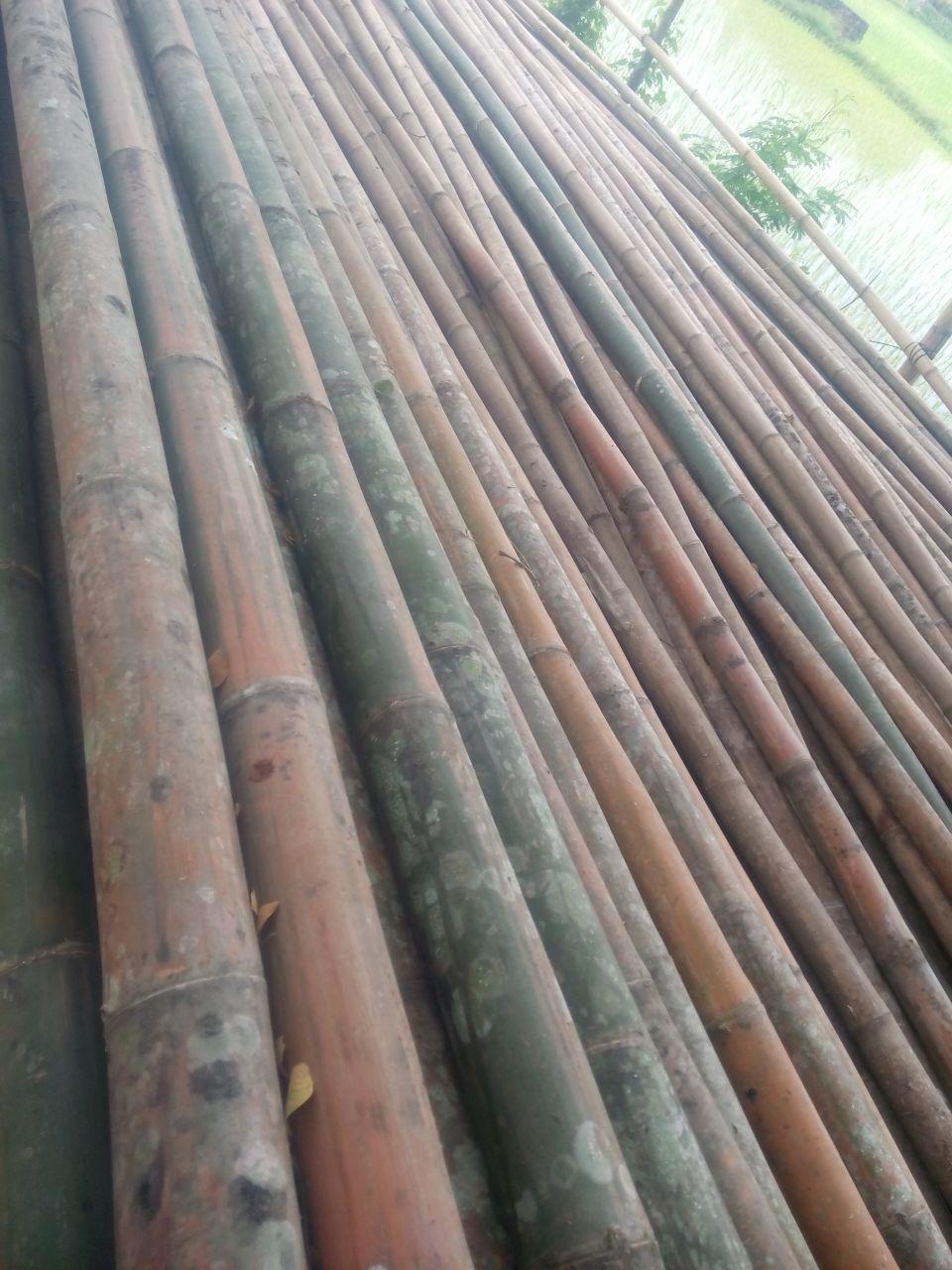 Jual Bambu di makassar