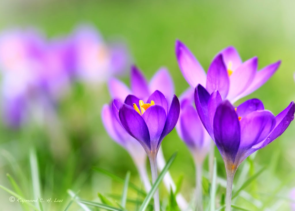 Beauty Spring Flower Wallpapers HD