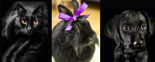 The Gothic Catwalk Blog: Gothic Names For Your Pet