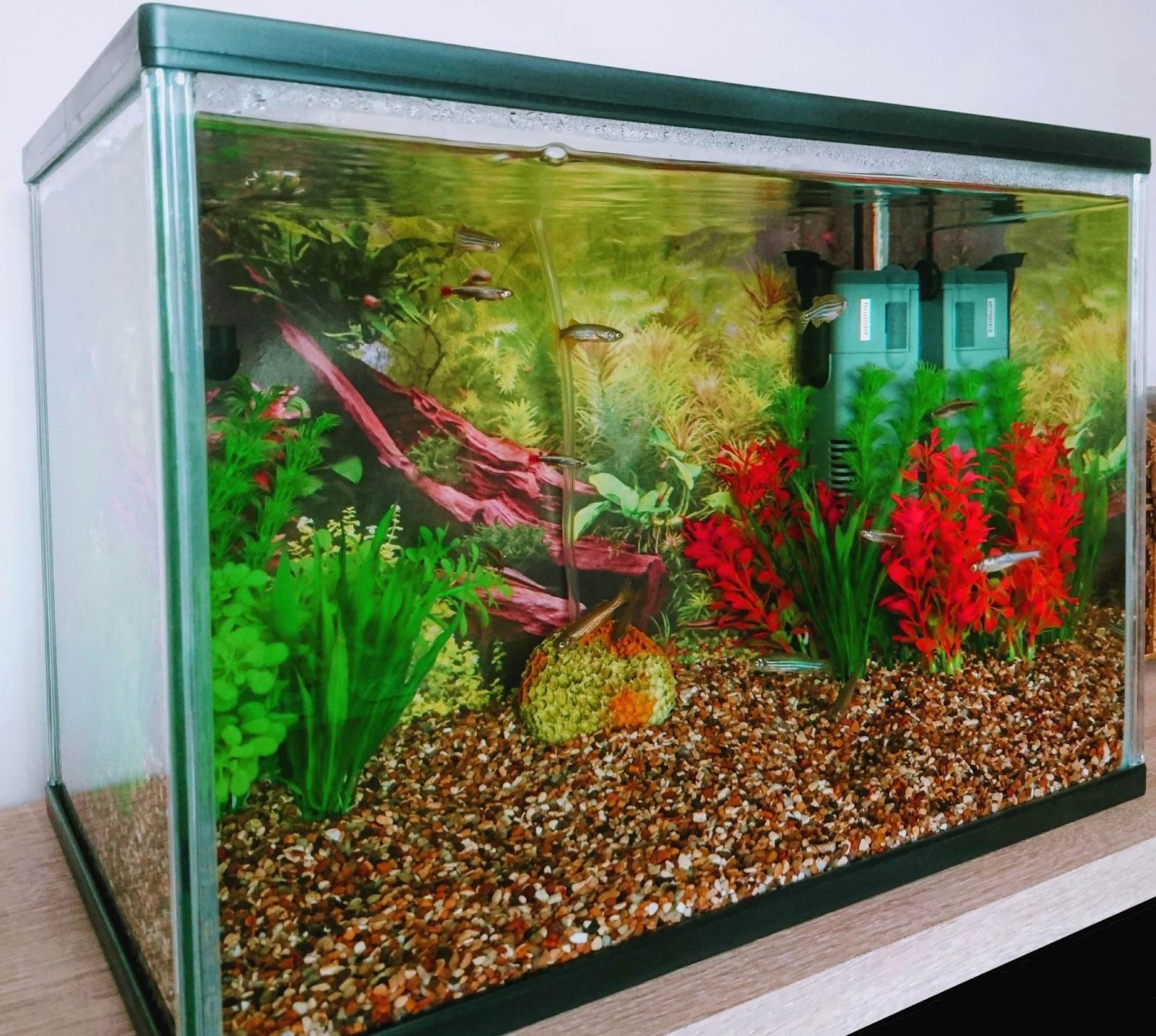 fa767b9b127 Amateur Aquatics - Keeping fish - Setting up your first fish tank - Part 1
