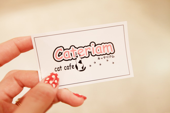 Japanese Cat Cafés - have some coffee and hang out with cats!