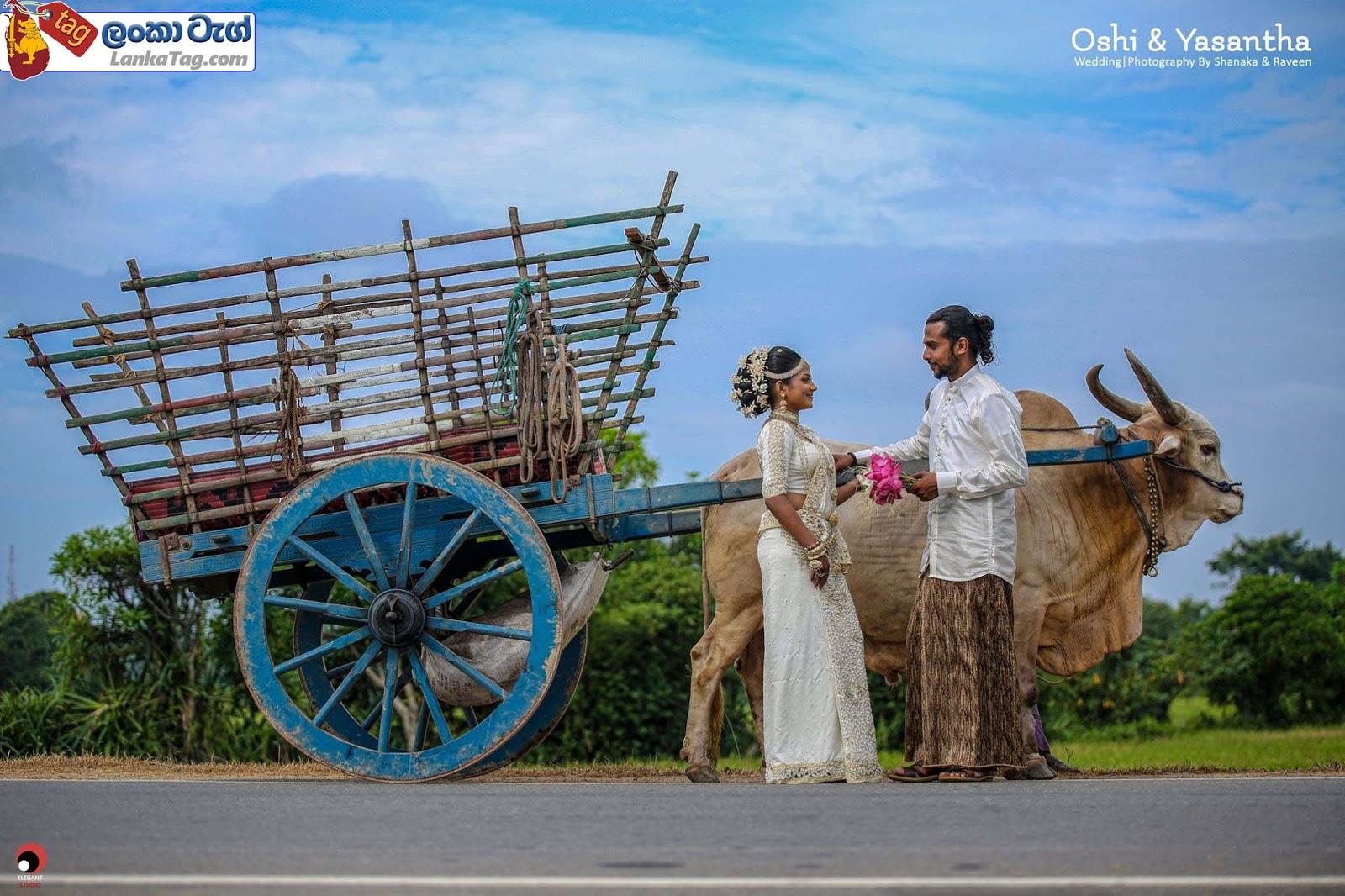 sri lankan wedding dress  42