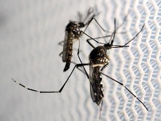Mosquito Aedes aegypti, transmissor do vírus da zika, da dengue e da chikungunya (Foto: Paulo Whitaker/File Photo/Reuters) Neste ano, 87 pessoas morreram em Pernambuco devido às arborviroses. De acordo com o boletim divulgado pela Secretaria Estadual de Saúde (SES) nesta terça-feira (30), são 18 óbitos ocasionados por dengue, 53 por chikungunya e 16 com resultados positivos para essas duas doenças transmitidas pelo mosquito Aedes aegypti. Os novos dados são referentes ao período compreendido entre 3 de janeiro e 27 de agosto.
