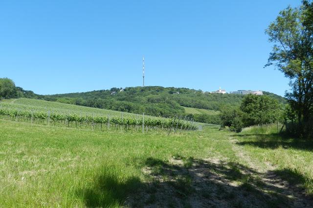 W oddali wzgórze Kahlenberg