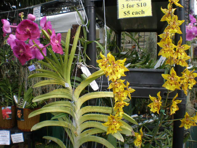 Heyplantman Exotic Tropical Plants From St Pete Fl