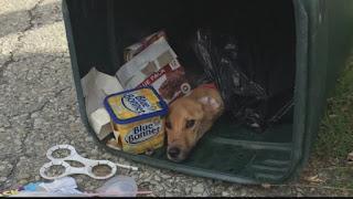 No life should be discarded like trash