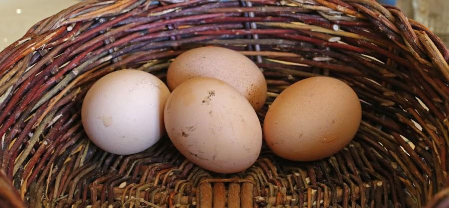 Des œufs de poule