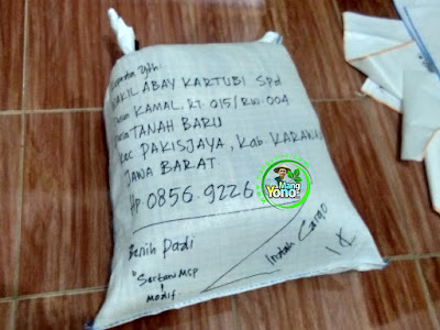 Benih Pesanan  WAKIL ABAY KARTUBI Spd. Karawang, Jabar  (Sesudah Packing)