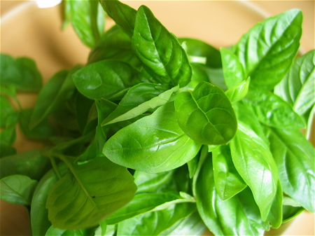 The Adventures Of Tummy: Did You Know that ripping basil