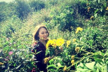 Thung lũng hoa vàng-