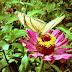 Flower Book Junho