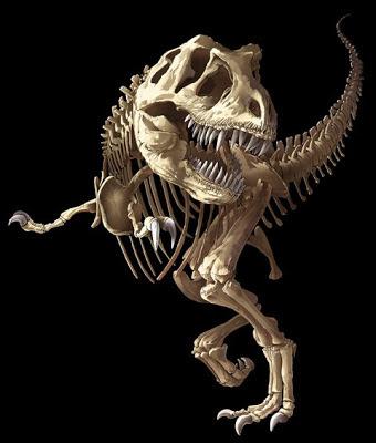 T-Rex Skeleton - Dinosaure squelette