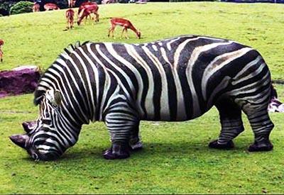20 Bizarre Hybrid Animal That Actually Exist