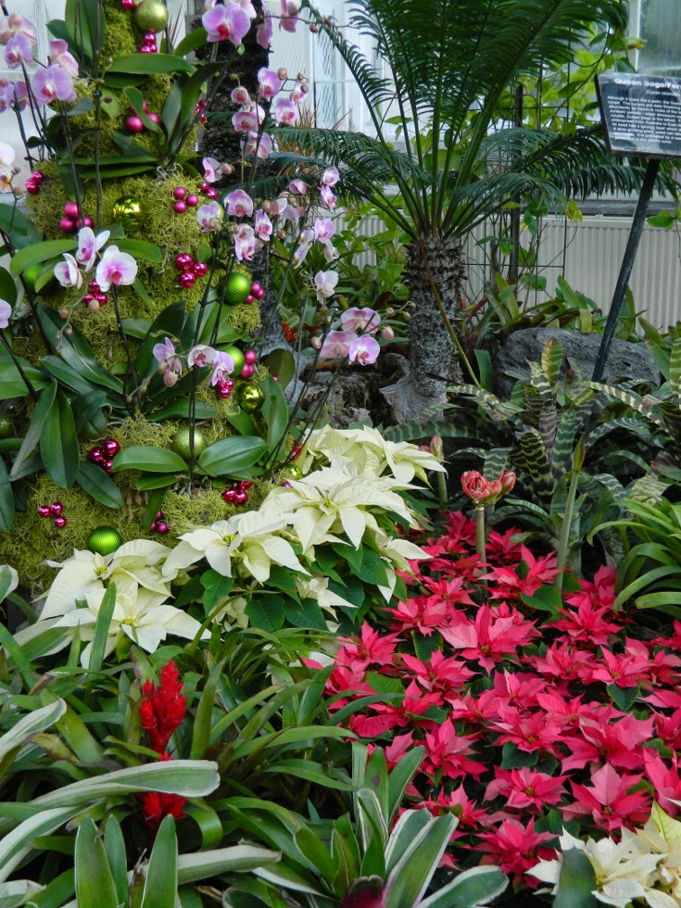 Orchid Christmas tree Allan Gardens Conservatory Christmas Flower Show 2014 by garden muses-not another Toronto gardening blog